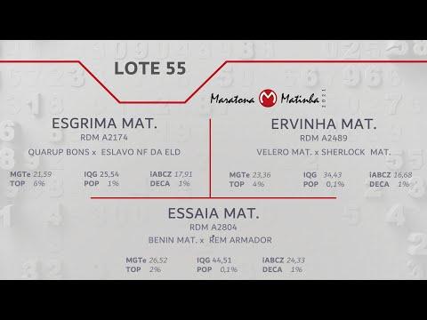 LOTE 55 Maratona Matinha