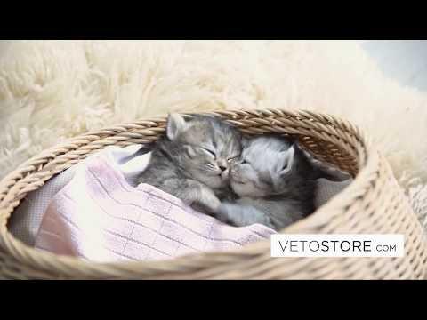 Vidéo Billboard Vetostore