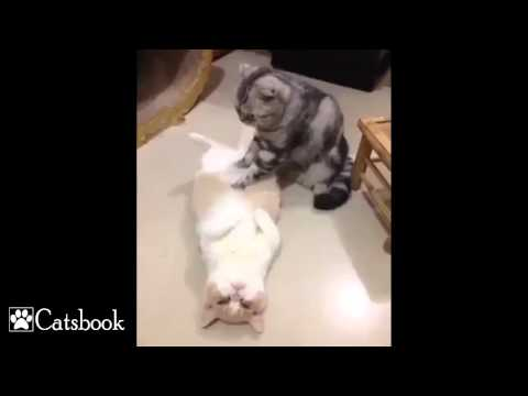 kitten-massage-therapy