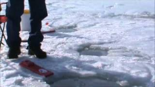 catching perch ice fishing with bmj hookers headboard visit bmjhookers com