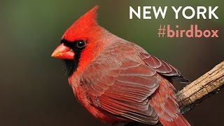 Music Made from Real Bird Songs: New York