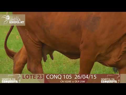 LOTE 23 CONQ 105