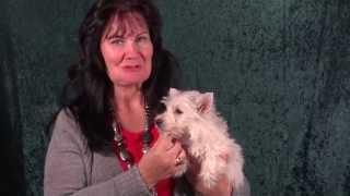 West Highland White Terrier Welpen Www.welpenvermittlung-hunde.at