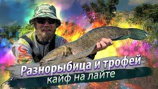 СТОЛЬКО РАЗНОЙ РЫБЫ на этом участке реки Рыбалка на лёгкую снасть три новых вида трофей 2019 09