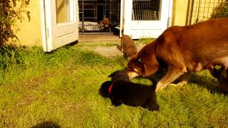 Eliina Puppy Gang - Snowdogs thumbnail