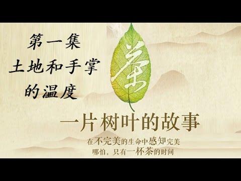 """""""茶,一片树叶的故事纪录片""""的图片搜索结果"""