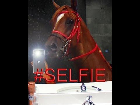 #SELFIE -Talking Horse
