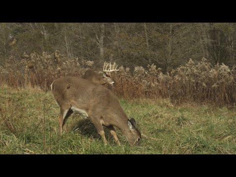 How to Hunt Pressured Deer - Land of Whitetail, Full Episode