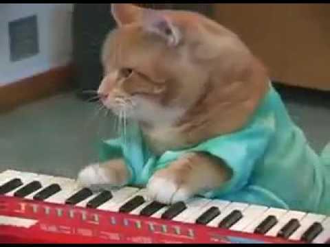 Katze macht Musik / The Flash