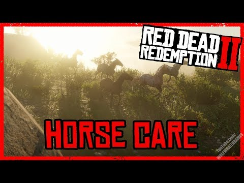 Horse Care and Maintenance - Red Dead Redemption 2 - Horse Guide