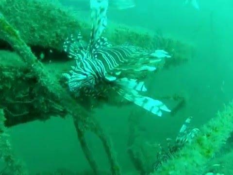 Lionfish on CSB