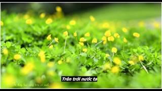 Thằng Cuội -  Ngọc Hiển - Tôi thấy hoa vàng trên cỏ xanh