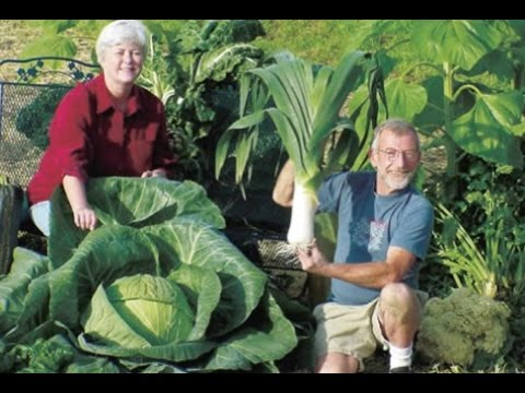 Giant Produce Video