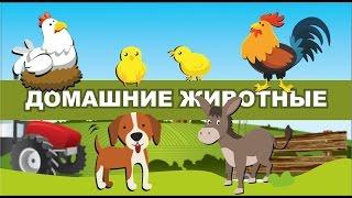 Детские загадки. Домашние животные.
