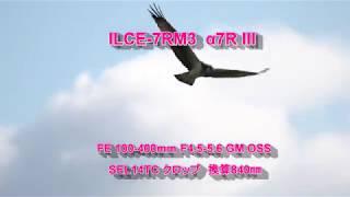 SONY α7RⅢ ミサゴ thumbnail