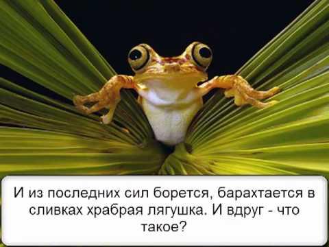 Притча. Две лягушки