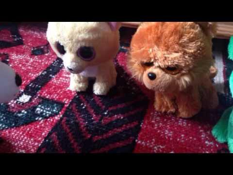 Pablo's chihuahua school episode 3: Big ears 🐕