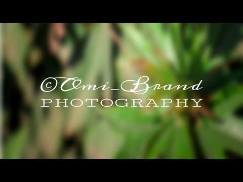 Photography Signature Logo PicsArt Tutorial | Photography Logo | OMI's WORLD thumbnail