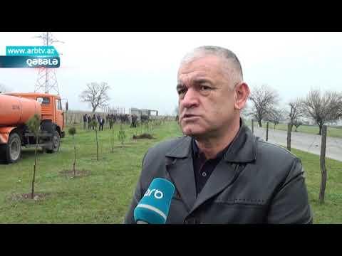 Ilqar Qebeleli - Deliyem Divaneyem - 2019  Avar Mix