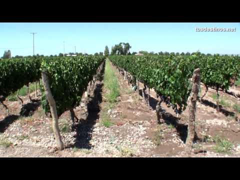 Antaris Travel - Mendoza e a rota do vinho