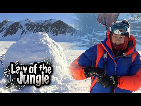The Tribe Builds an Igloo!!! [Law of the Jungle Ep 311]
