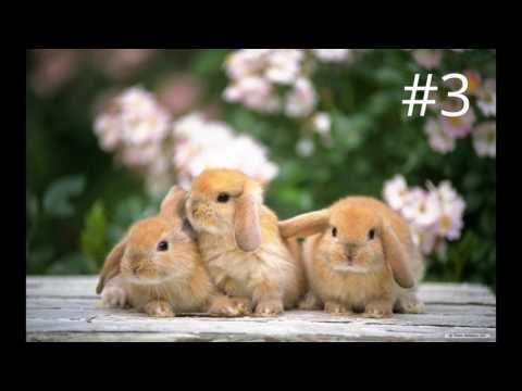 Top 5 konijnen namen