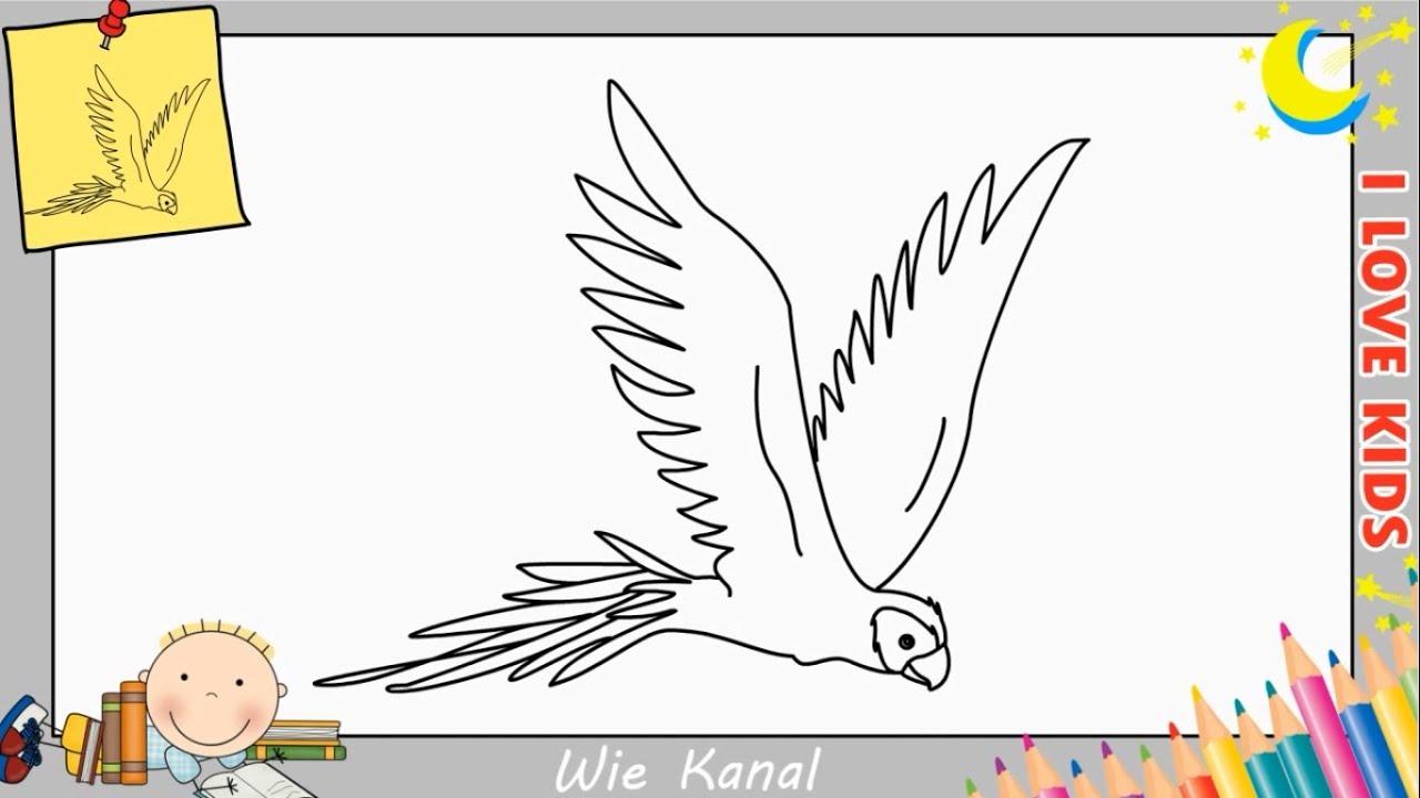 Wie Zeichnet Man Einen Papagei Schritt Fur Schritt Fur Anfanger