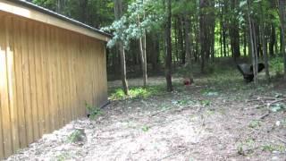 Pole Barn Expansion - Adding 10x30 Wood Storage Area - 6-1-2011