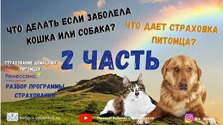 20.11.2019 Страхование домашних животных 2 часть