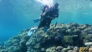 Первый опыт дайвинга в Красном море Шарм эль Шейх 2021