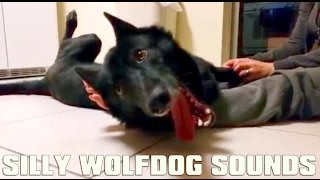 Silly Wolfdog Sounds