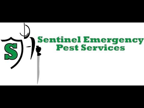 Emergency Bed Bug Treatment Columbus, OH