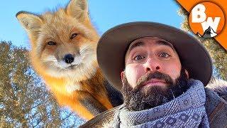 Can Coyote Outfox a Fox?!