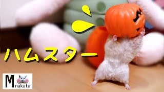 毎日更新!チャンネル登録よろしくお願いします☆ □Daily upload!Thanks f...