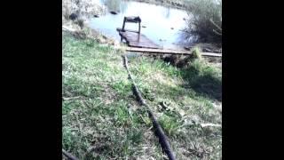 """Копия видео """"кошачья ловля рыбы"""""""