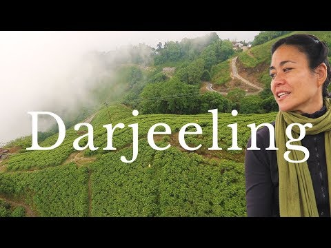 DARJEELING TRAVEL GUIDE | 14 Things to Do in Darjeeling