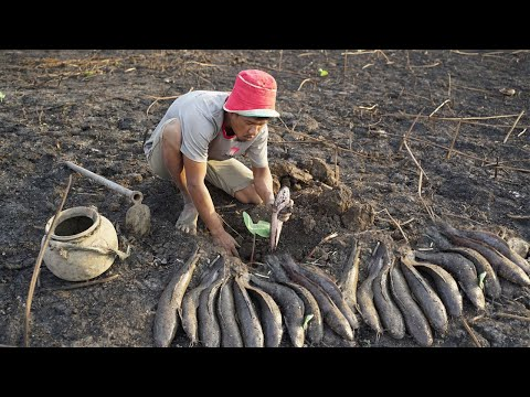 Rural Fishing Dry Soil 2020 - Find & Cat Fish Underground In Dry Lotus Lake In Dry Season By Skills