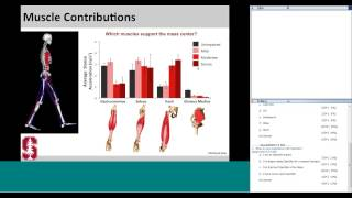 Using OpenSim to explore the mechanics of pathological gait patterns