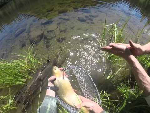Monster Colorado Cutthroat in a high mountain lake
