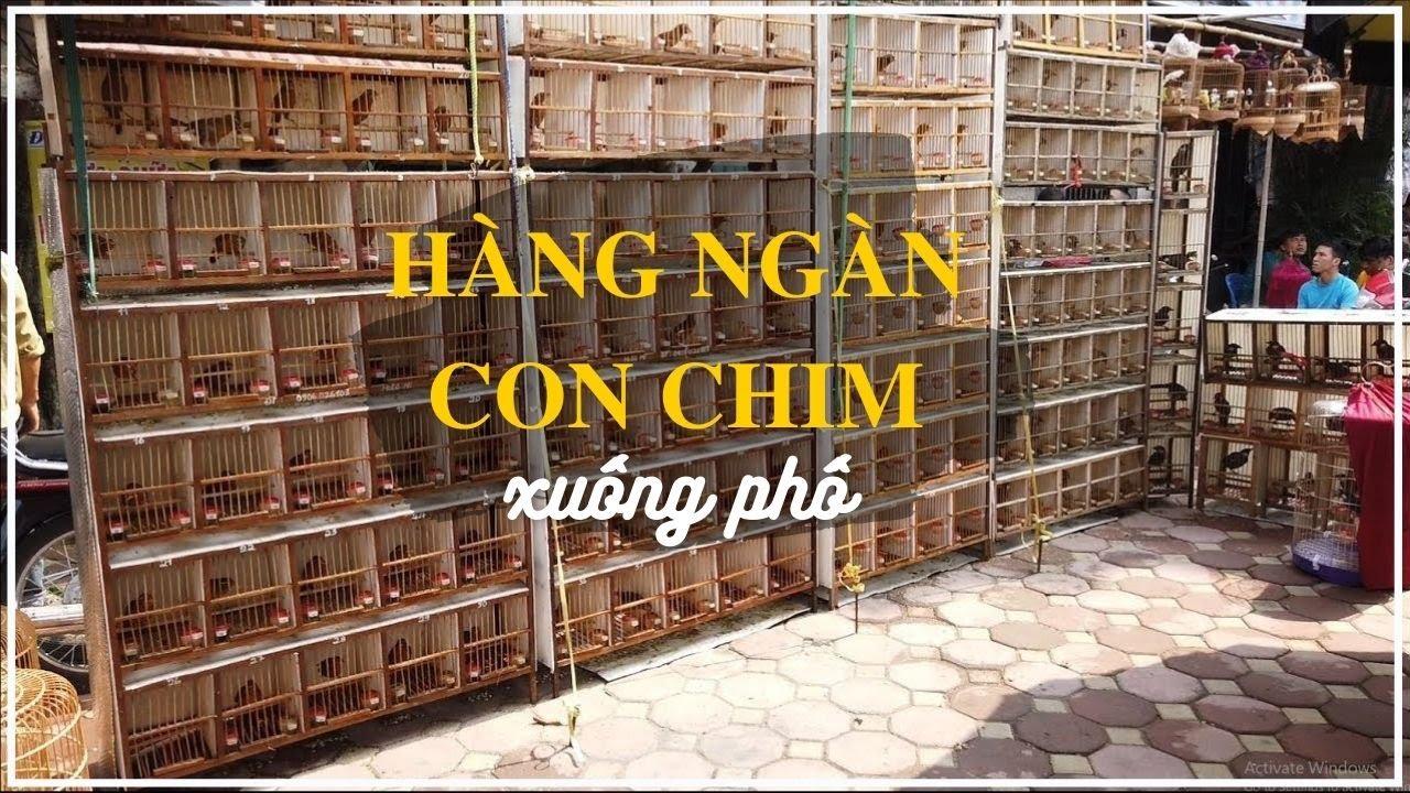 Hàng ngàn CON CHIM xuống phố – Chợ Chim Hoàng Hoa Thám,Hà Nội