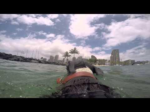 Team Pau Hana- Doggy Surfing Take 1