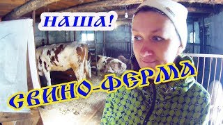 видео Свиноводство и опорос
