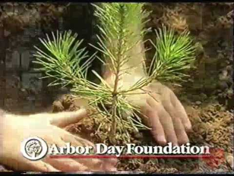 Arbor Day Foundation   Television Commercial   2009