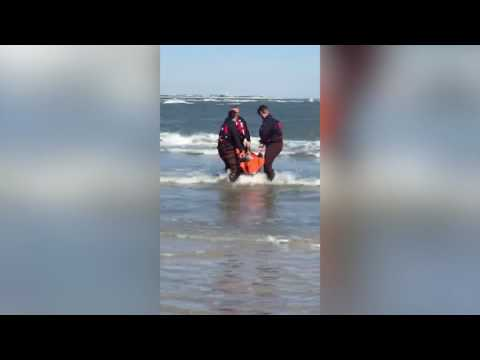 Stranded dolphin gets help from folks in North Wildwood