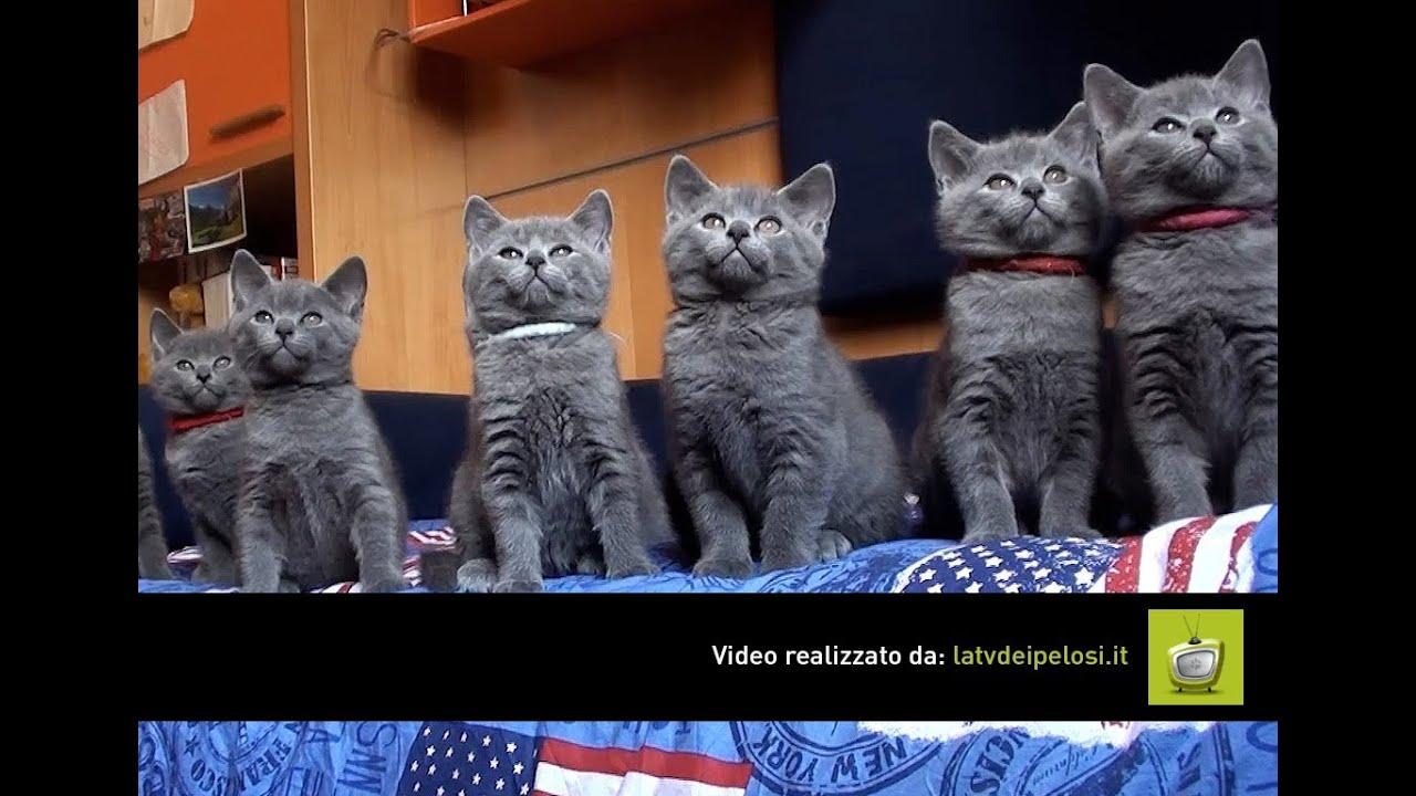 Gatto Certosino 8 Cuccioli Fantastici Youtube
