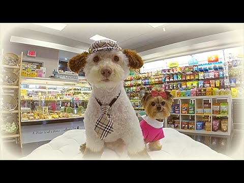 Dog Fashion Show at Petshion Boutique