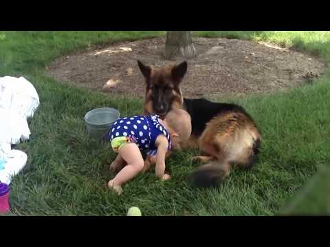 Dog Protecting Baby Dog Compilation-He Doesn't Allow Anything to Hurt the Baby