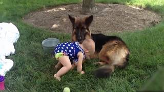 Adorable Dog are Babysister | Dogs has loved his little sister before she was born