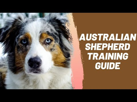 Australian Shepherd Training Guide