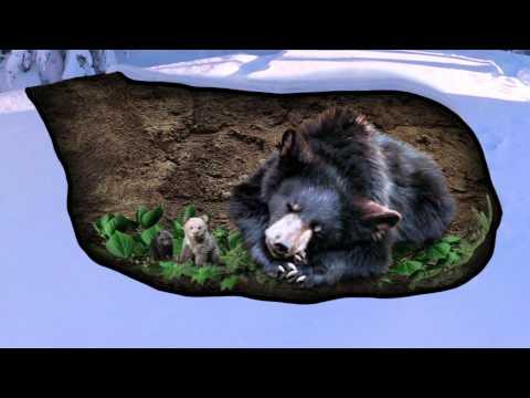Вопрос: Почему медведи спят зимой?